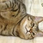 猫の鳴き声「ゴロゴロ」に隠された4つの気持ち