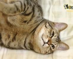 【猫の鳴き声】ゴロゴロに隠された 猫の4つの気持ち