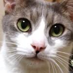 猫の『ヒゲ』から読み取る 4つの気分