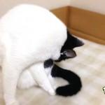 猫の不思議な行動 3つの理由と気持ちの裏側
