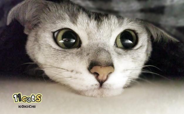 何かを企む猫(11Cats コキチ)