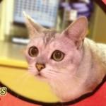 『猫が好きなおもちゃ』に必要不可欠な4つの要素