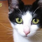 猫の感情メカニズムは人間とほとんど同じって知ってた?