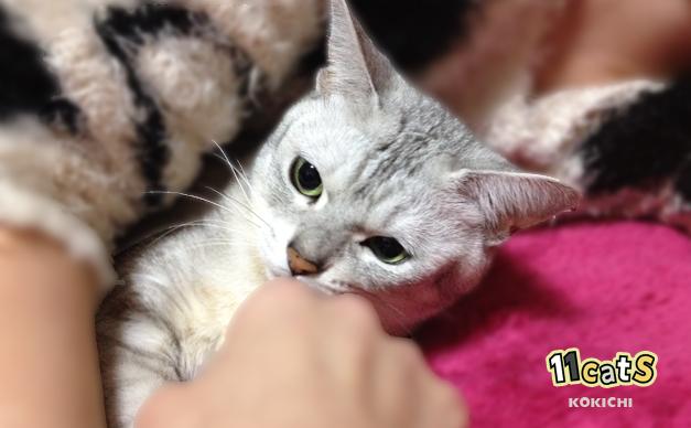 猫の気持ちを理解して猫に好かれる人になろう!今日からできる 最も効果的な5つの方法
