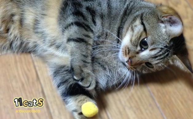 ボールで遊ぶ猫(11Cats コクロコ)