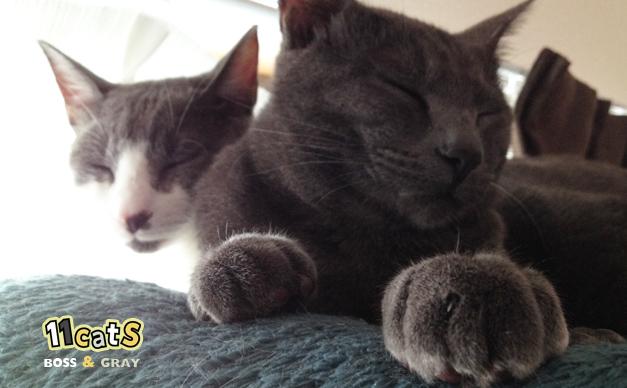 前足でふみふみする猫(11Cats グレイ)