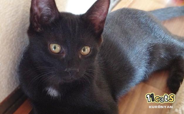 キャットタワーの横で休む黒猫(11Cats クロニャン)