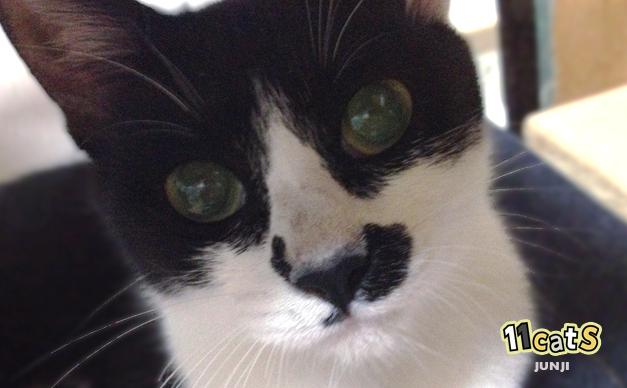 目をクリクリさせた猫(11Cats ジュンジ)