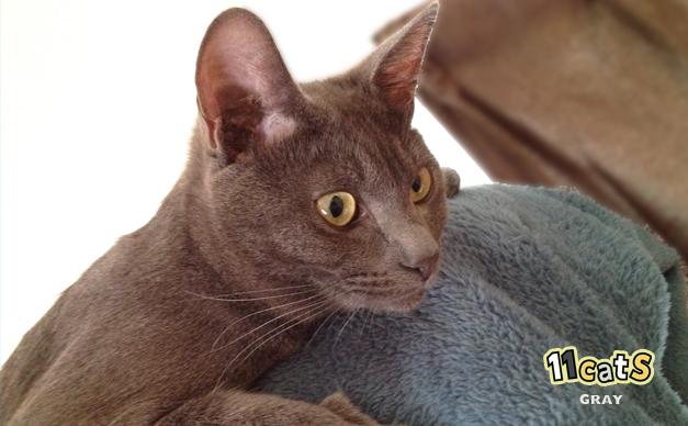 くつろぐ猫(11Cats グレイ)