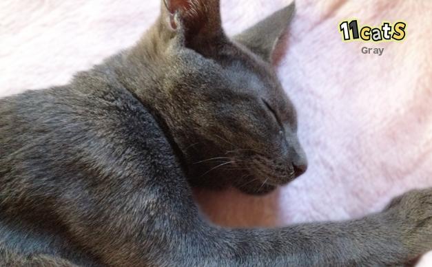 寝ている猫(11Cats グレイ)