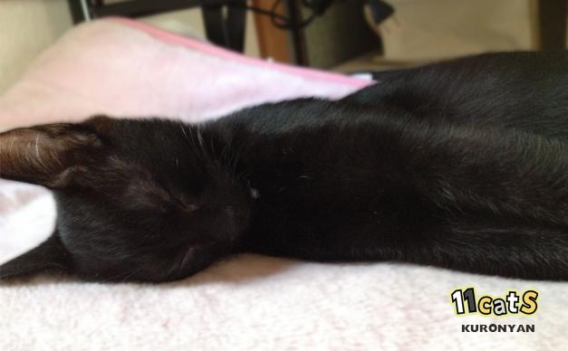 人形のように眠る猫(11Cats クロニャン)