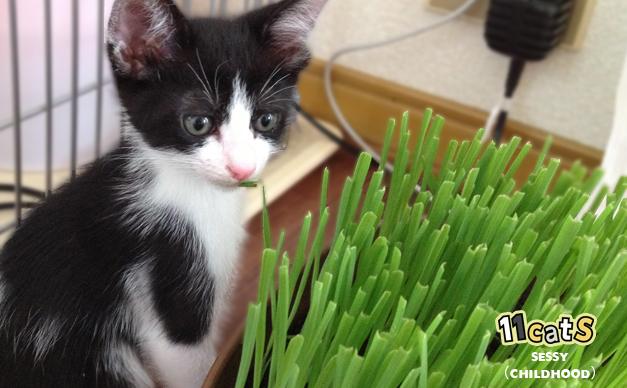 猫草を見つめる子猫