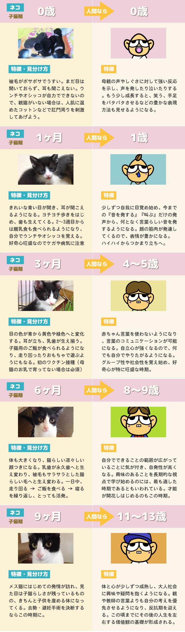 猫の年齢と人間の年齢 比較早見表