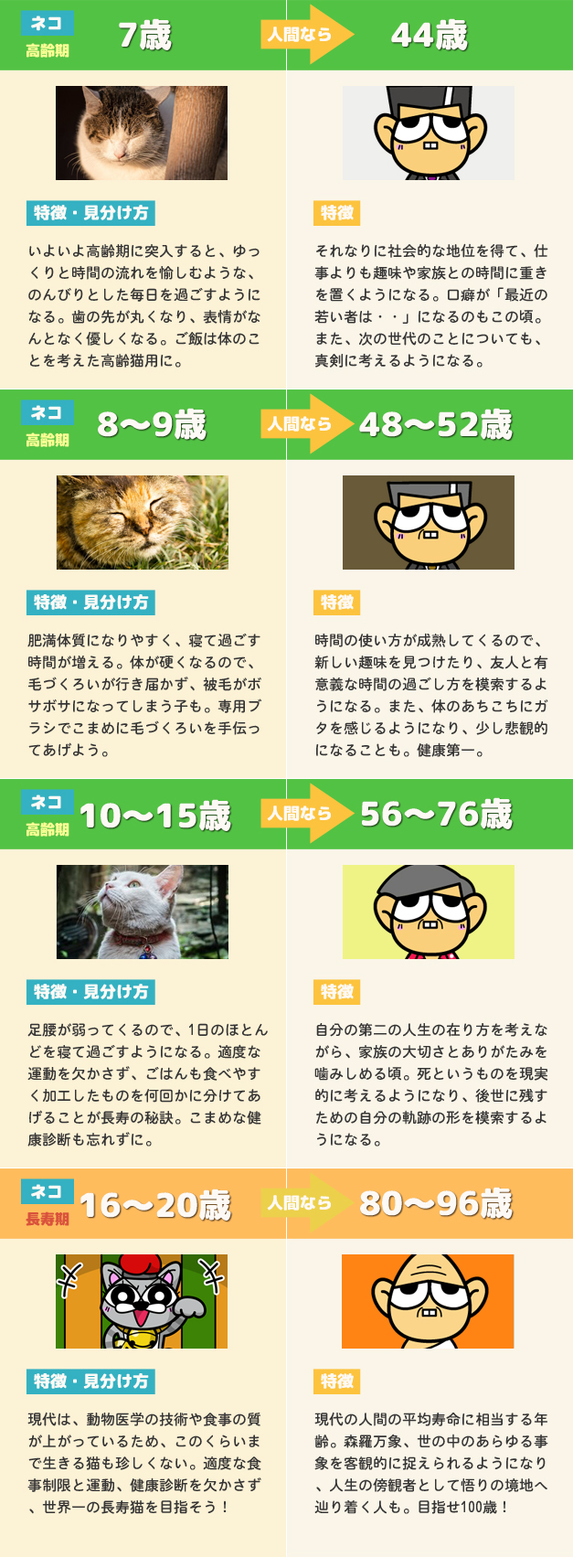 猫の年齢と人間の年齢 比較早見表3