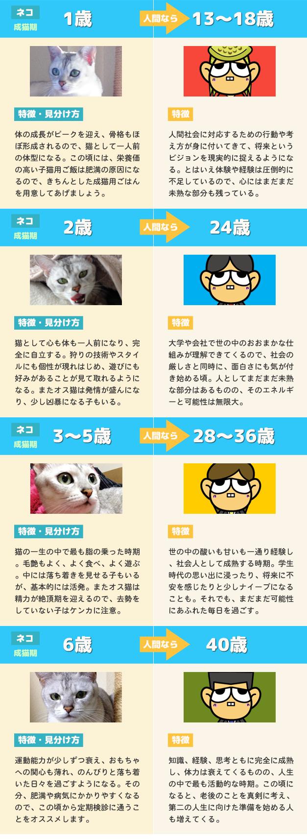 猫の年齢と人間の年齢 比較早見表2