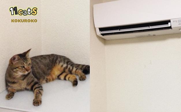 エアコンの風で涼む猫(11Cats コクロコ)