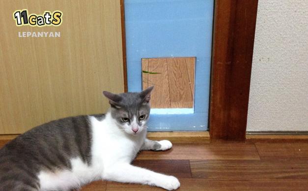 自作の猫用ドアとそこでくつろぐ猫(11Cats レパニャン)