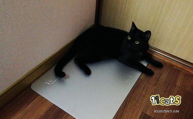 アルミプレートで涼む黒猫(11Cats クロニャン)