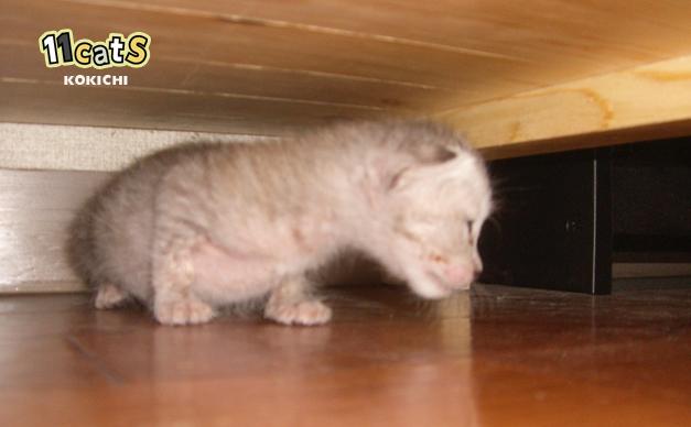 棚の下に潜る子猫(11Cats コキチ)