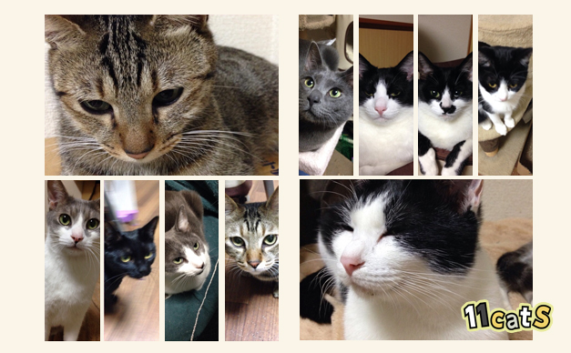 色々な模様の猫(11Cats)