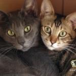 愛猫家さん必見!猫の年齢にまつわる 勇気と希望を貰えるデータ 3選