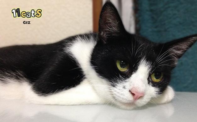 考え事をする猫の画像(11Cats ギズ)