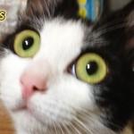 猫好きのほとんどが勘違いしている4つの常識