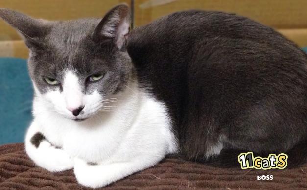くつろぐ猫(11Cats ボス)