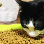 【獣医さんおすすめ】健康第一な我が家の猫用カリカリ トップ3