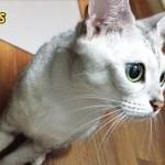 【たっぷり猫画像18枚】我が家の11匹の猫たちの日常『夏編』