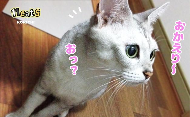 何かに気づく猫の画像(11Cats コキチ)
