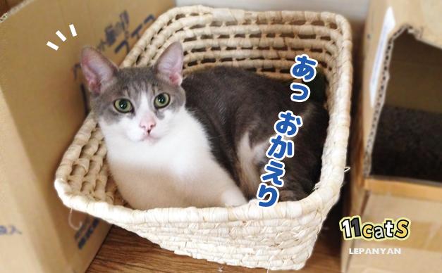 猫カゴに収まる猫の画像(11Cats レパニャン)
