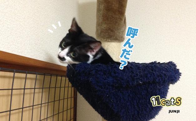 ハンモックを占拠する猫の画像(11Cats ジュンジ)