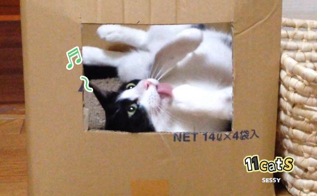 ご機嫌な猫の画像(11Cats セッシー)
