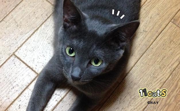 何かに気づく猫の画像(11Cats グレイ)