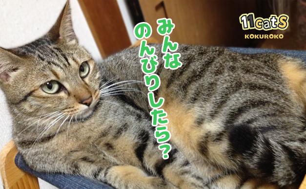 くつろぐ猫の画像(11Cats コクロコ)