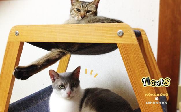 くつろぐ猫の画像(11Cats コクロコ&レパニャン)