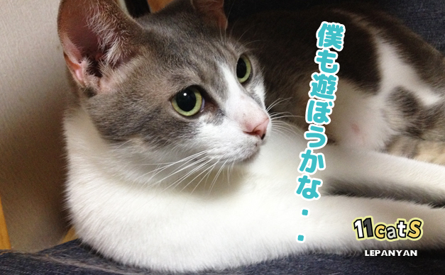 うずうずしている猫の画像(11Cats レパニャン)