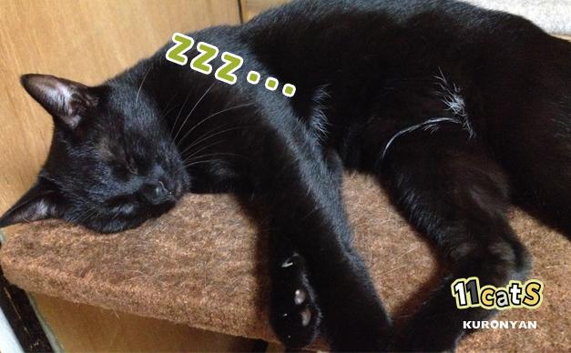 爆睡している猫の画像(11Cats クロニャン)