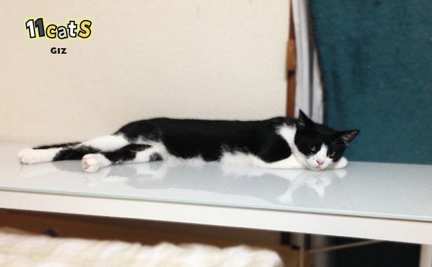クーラーの下でくつろぐ猫の画像(11Cats ギズ)