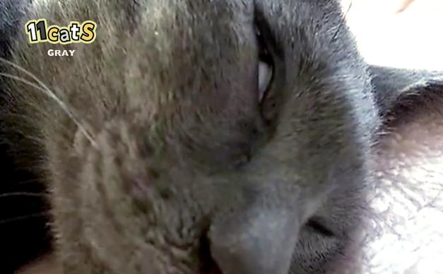 11Catsおもしろ猫動画 ベストセレクション 2015