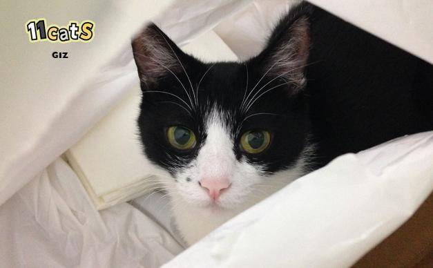 様子を伺う猫の画像(11Cats ギズ)