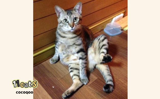 壁にもたれて毛づくろいをする猫の画像(11Cats ココクー)