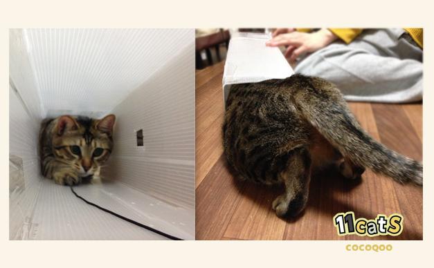 トンネルをくぐる猫の画像(11Cats ココクー)