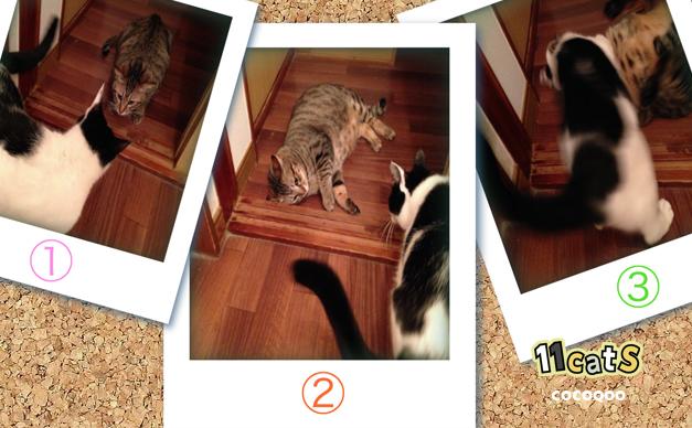 猫パンチを受ける猫の画像(11Cats ココクー)