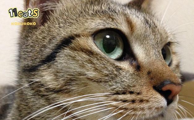 そっぽを向く猫の画像(11Cats コクロコ)