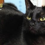 【11Catsストーリー】孤高の黒猫『クロニャン』