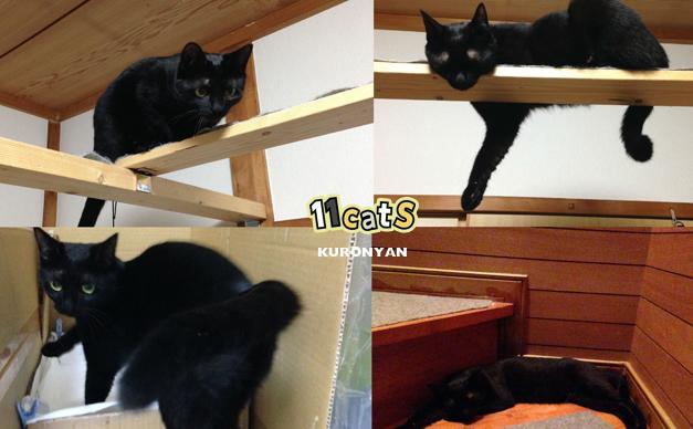 群れるのを嫌う黒猫の画像(11Cats クロニャン)
