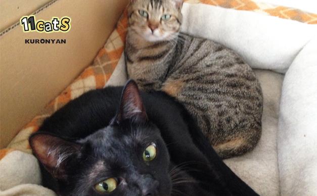母猫と添い寝をする黒猫の画像(11Cats クロニャン)