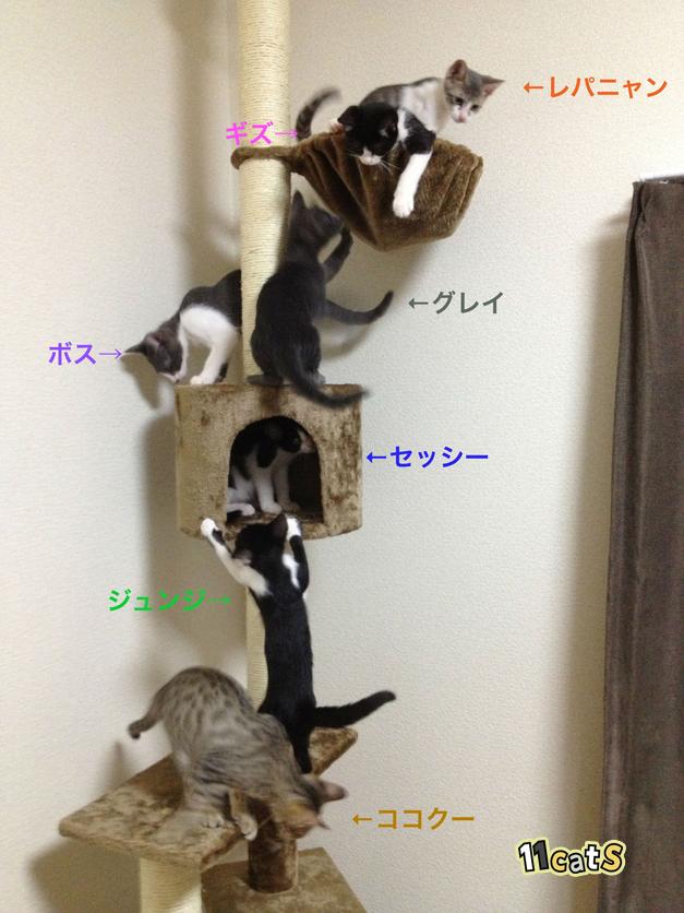 キャットタワーに登る子猫たちの画像(11Cats)